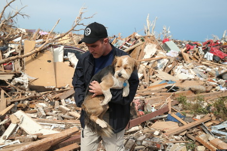 How To Help Animals Affected By The Oklahoma Tornado | Chirstophers Philanthropy | Scoop.it