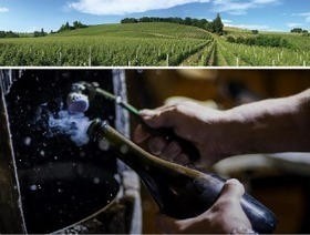 Sparkling Verdicchio wines | Wines and People | Scoop.it