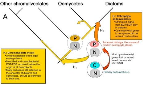 BMC Genomics: Are algal genes in nonphotosynthetic protists evidence of historical plastid endosymbioses? | Plant Genomics | Scoop.it