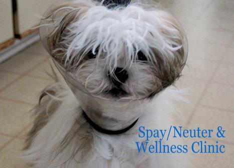 Santa Fe Animal Shelter Spay/Neuter Wellness Clinic | Pete's Pets, Santa Fe NM  87507 | Scoop.it