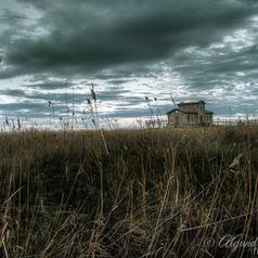 Deep in the delta | Photography - Design Graphic - SocialMedia | Scoop.it