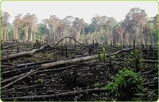 Mengenali Berbagai Macam Penyebab Terjadinya Kerusakan Hutan   Pemanasan Global   Scoop.it