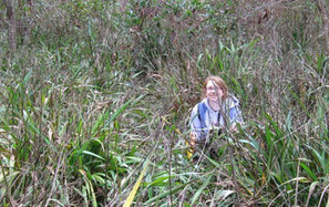 Global Plant Diversity Hinges on Local Battles Against Invasive Species (Science) | Plant Biology Teaching Resources (Higher Education) | Scoop.it