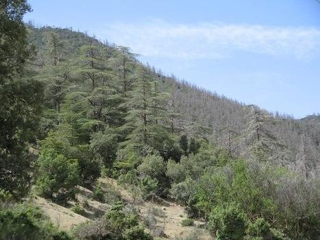 Préservation du patrimoine forestier: Treize projets pour Alger à l'horizon 2029 - Environnement Algérie | Sam Blog | N'imitez pas, innovez | Scoop.it