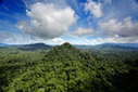 The year in rainforests | Messenger for mother Earth | Scoop.it