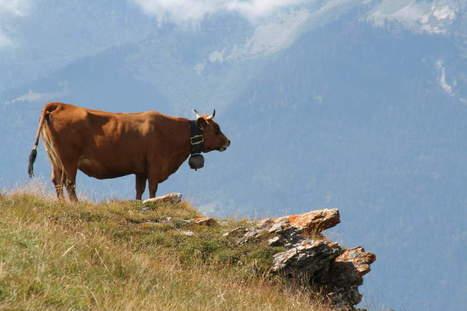De l'élevage à la production industrielle : comment l'animal est devenuproduit | Gastronomie et alimentation pour la santé | Scoop.it
