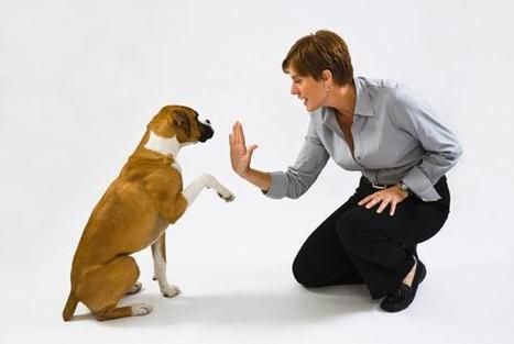 10 Top and Best ways to Train A Puppy |Dog or Pets | indianjouranalhealth.com | Scoop.it
