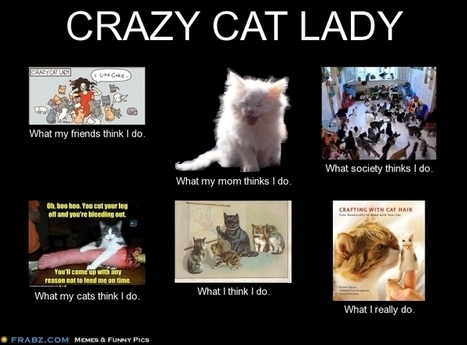Crazy Cat Lady | What I really do | Scoop.it