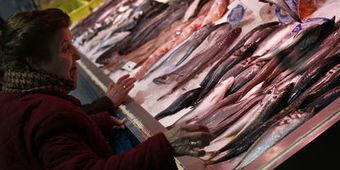L'UE autorise à nouveau les farines animales pour les poissons   veille perso   Scoop.it