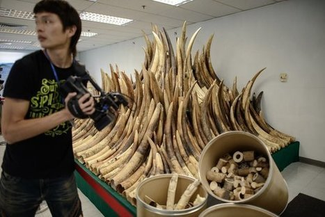 In Huge Win For Elephants, Hong Kong Finally Vows To 'Phase Out' Ivory Sales | Breaking World - African News | Scoop.it