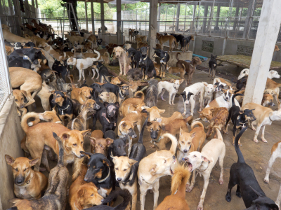 How to Prevent Animal Hoarding - Animal Life | Animal Care & Exotics Species | Scoop.it