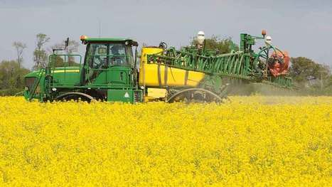 Oilseed rape area is set to slip for fifth year in a row - Farmers Weekly | Agrarforschung | Scoop.it