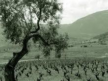 Mouson Estate, Boeotia, Central Greece - GrapeRover.com   Ioanna D's Educational Tools Topic   Scoop.it