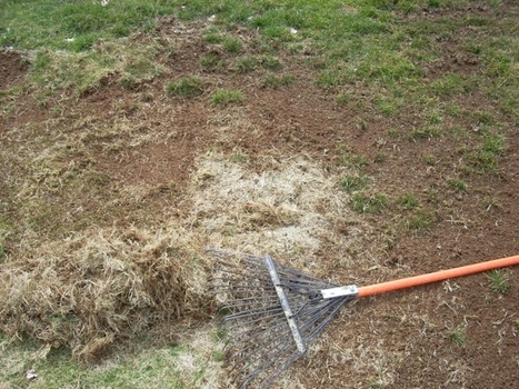 Some facts about lawn care and maintenance - ReminderNews | lawn care | Scoop.it