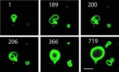 Membrana sintética cresce como se fosse viva | tecnologia s sustentabilidade | Scoop.it
