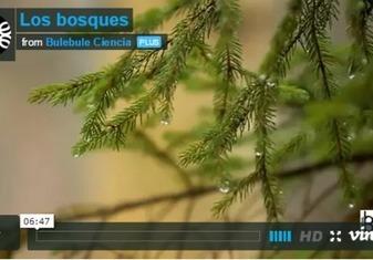 Los bosques | Actualidad forestal cerca de ti | Scoop.it