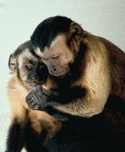 Frans De Waal; Primates, Fairness, The Evolution of Morals - OpEdNews | Empathy in other animals | Scoop.it