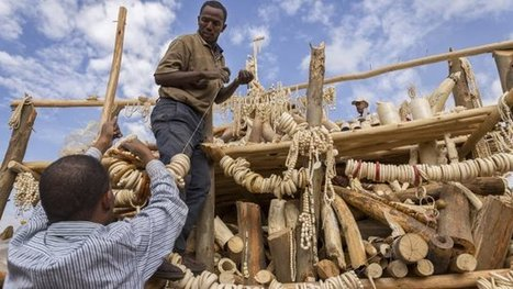 Ethiopian govt burn 6.1 tons of ivory to discourage poaching | Wildlife Trafficking: Who Does it? Allows it? | Scoop.it