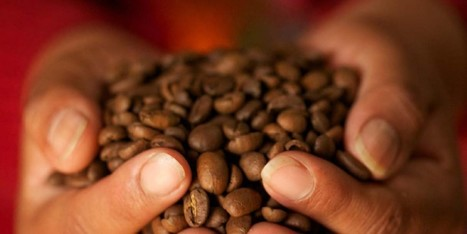 "Beware coffee drinkers! (""enjoy coffee now as it is still plenty & cheap; climate may change that"") 