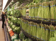 Customers Shift From Organic To Local | ECONOMIES LOCALES VIVANTES | Scoop.it