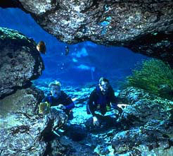 Cave Diving Adventure at Ginnie Springs | ginniespringsoutdoors | Scoop.it