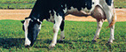 June is National Dairy Month | Nutrition, Food Safety and Food Preservation | Scoop.it