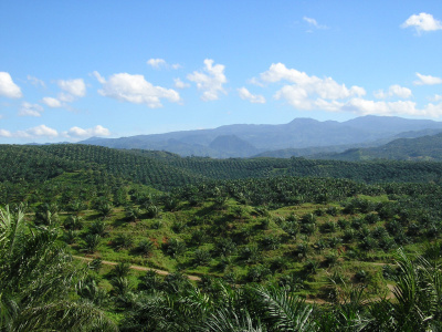 New labelling for palm oil | The Glory of the Garden | Scoop.it