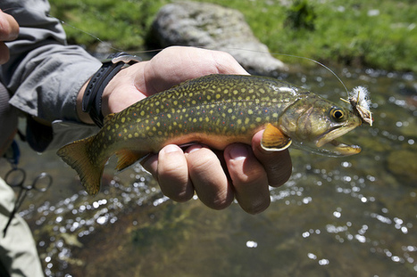 Fly Fishing Made Easy With Numerous Helpful Tips | Super Fishing Ideas | Scoop.it