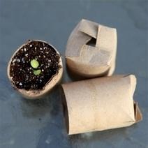 ¿Preparando semilleros o planteles? Toma nota de estos consejos e ideas para crear un huerto ecológico | ECOagricultor | Agroindustria Sostenible | Scoop.it