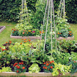 Intensive Gardening: Grow More Food in Less Space (With the Least Work!) | Gardening | Scoop.it
