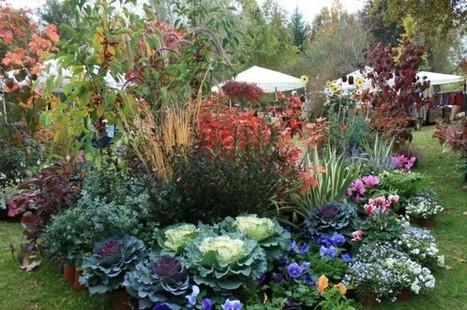 Ecco le migliori piante da giardino sempreverdi for Piante da giardino con fiori perenni
