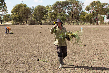 From farmland to wetland | Lorraine's Sustainable Biomes (NSW) (including Food security) | Scoop.it