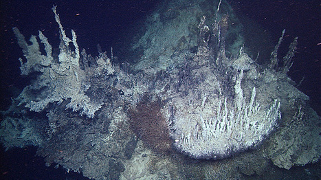 Deepest known hydrothermal vents discovered in the Pacific Ocean | Amazing Science | Scoop.it