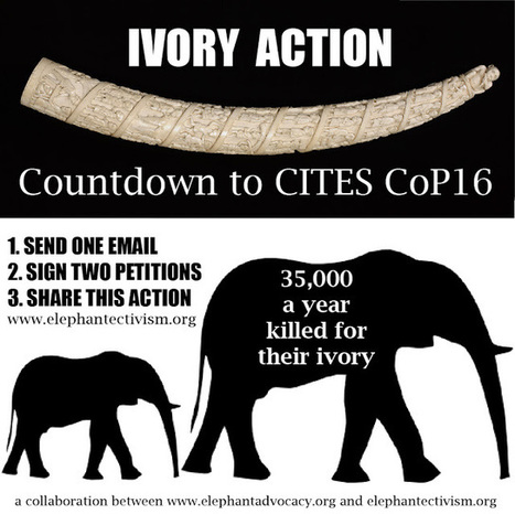 Elephant E-ctivism!: IVORY ACTION: Email. Petition. Share! | Wildlife Trafficking: Who Does it? Allows it? | Scoop.it