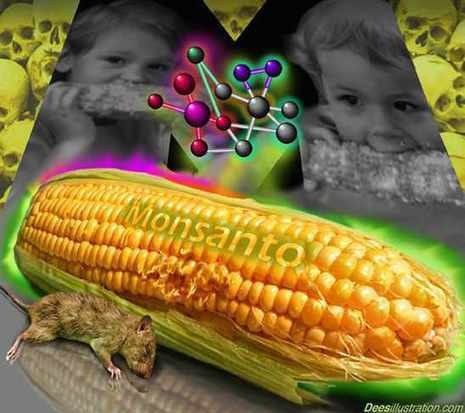 Entire Country of Poland Rejects All GMO Corn | We Are Change | Permaculture, Homesteading & Green Technology | Scoop.it