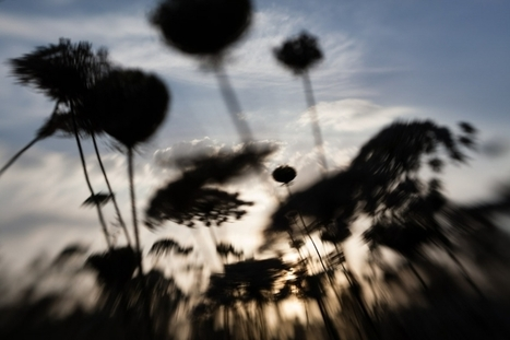 only lensbaby – one week project | Photographer's log | Scoop.it