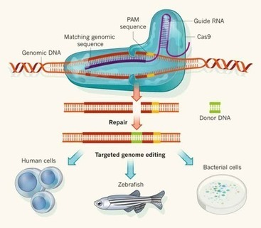 CRISPR as antiviral tool: Cas9 for Hepatitis C - Biotechin.Asia | Hepatitis C New Drugs Review | Scoop.it