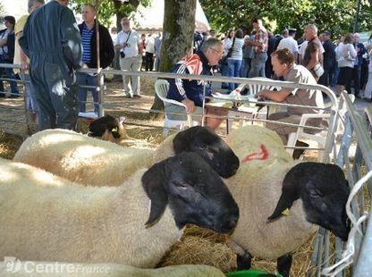 La 52e foire nationale de reproducteurs ovins se déroulera le jeudi 3 septembre | Agriculture en Dordogne | Scoop.it