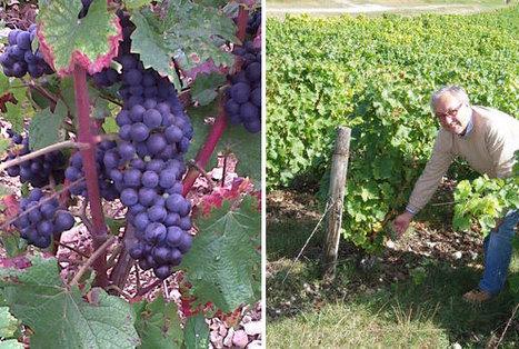 L'Italia produce più vino dei francesi ma loro bevono, esportano e guadagnano molto più di noi | Italica | Scoop.it