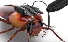 How To Hack A Cockroach So You Can Control It With Kinect | Teacher Leadership Weekly | Scoop.it