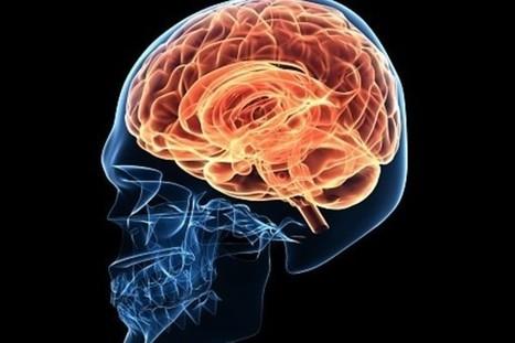 Mira algunas curiosidades sobre el cerebro humano - Informe21.com   I didn't know it was impossible.. and I did it :-) - No sabia que era imposible.. y lo hice :-)   Scoop.it