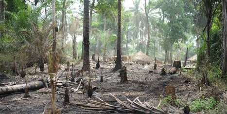 Lax rules put Congo's forests, key carbon reserve, at risk | GarryRogers NatCon News | Scoop.it