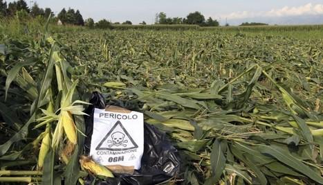 OGM, Monsanto, Roundup & Co : comment notre société produit des malades | les docs | Scoop.it