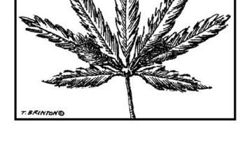 Marijuana is not Kryptonite   Cannabis News   Scoop.it