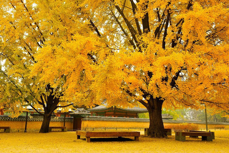 Gyeongbokgung Palace in South Korea During Autumn   The Best Places in the World to Travel   Scoop.it