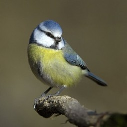 Why it's bad for the birds to feed them? | onlinepetanswers | Scoop.it