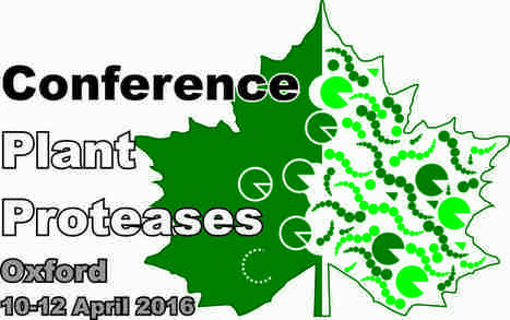 Plant Proteases 2016: University of Oxford, April 10-12. | Effectors and Plant Immunity | Scoop.it