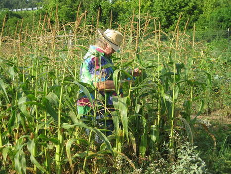 Area Wide News: Local News: Area gardeners battle heat, bugs, drought (07/29/11)   Garden Designer   Scoop.it