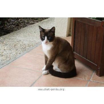 #180376 chat trouvé à STE HéLèNE | Sainte-Hélène de la Lande Médoquine 33480 scooped by Raymond PIOMBINO | Scoop.it