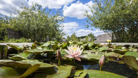 La biodiversité végétale : un enjeu pour notre futur -  9 octobre - Arboretum de la Vallée-aux-Loups, Châtenay-Malabry | Variétés entomologiques | Scoop.it